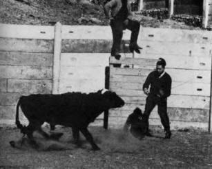 José Delgado dokázal zastavit na dálku podráždìného býka