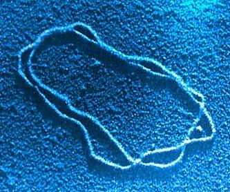 DNA molekula v elektronovém mikroskopu